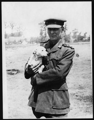 Puppy captured from the Germans