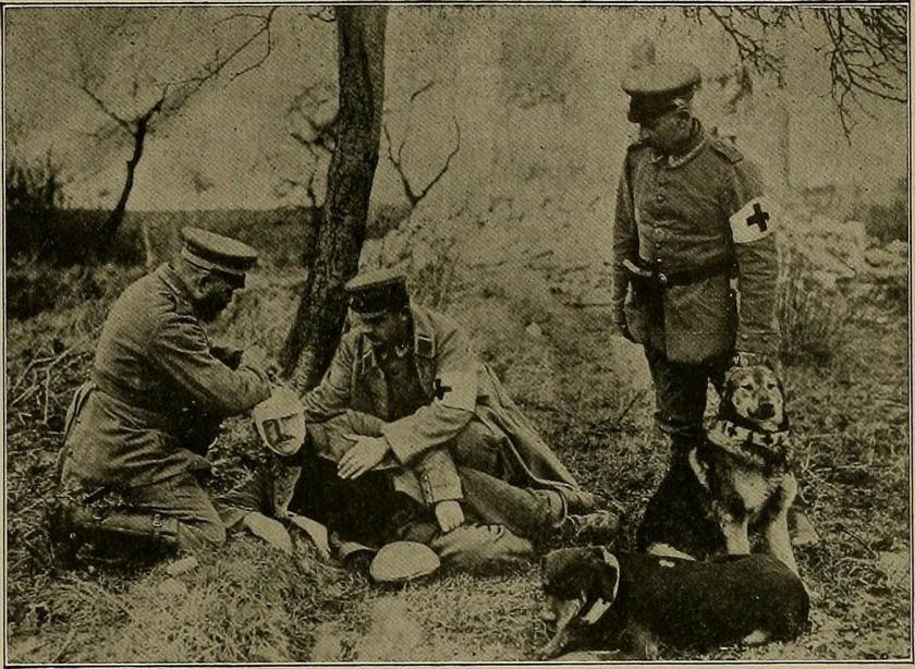 Red Cross dogs at work